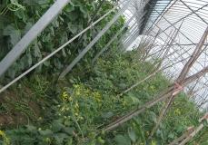 太倉種植溫室